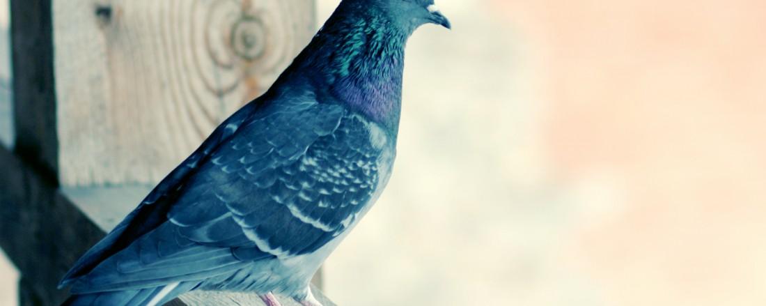 photo-bird-02